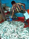 魚屋さん1